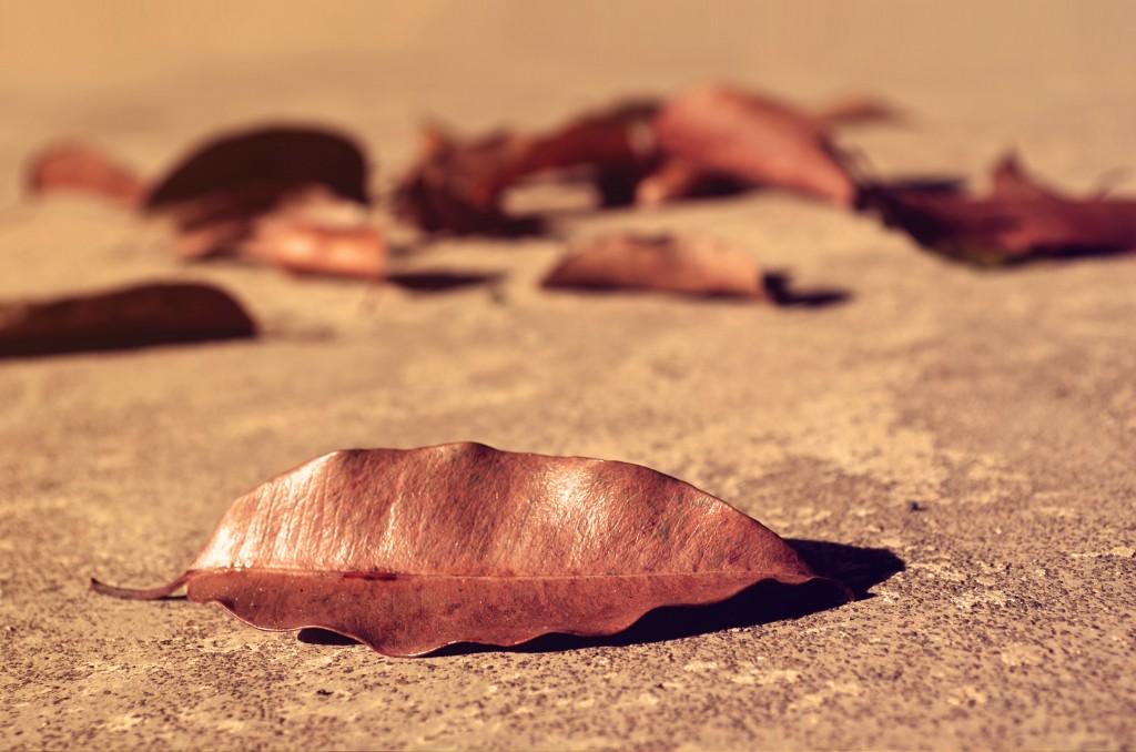 fallen_leaves_hires