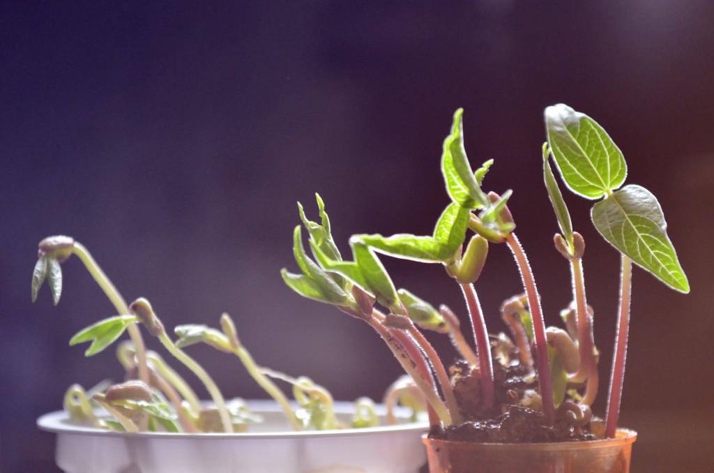plants_hires